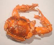 A dried Japanese crab